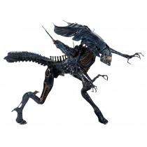 Aliens Xenomorph Quenn DLX Box Reprint